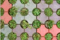 """...плитка  """"Эко """", смесь тротуарной плитки и газона."""